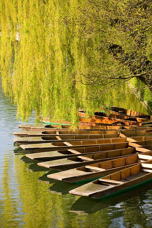 Punts on the River Cam in spring